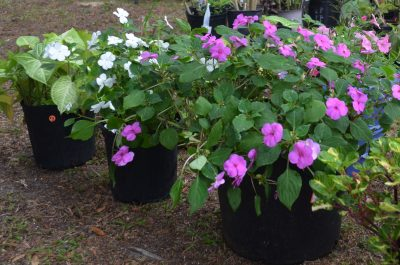Greater Fullerwood Plant Sale Featured Image