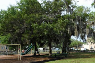 Tree Canopy Enhancement Program Featured Image